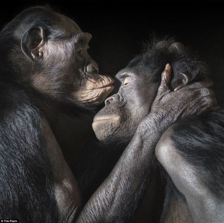 "Design Free Thursday // ""More Than Human"" by Tim Flach."
